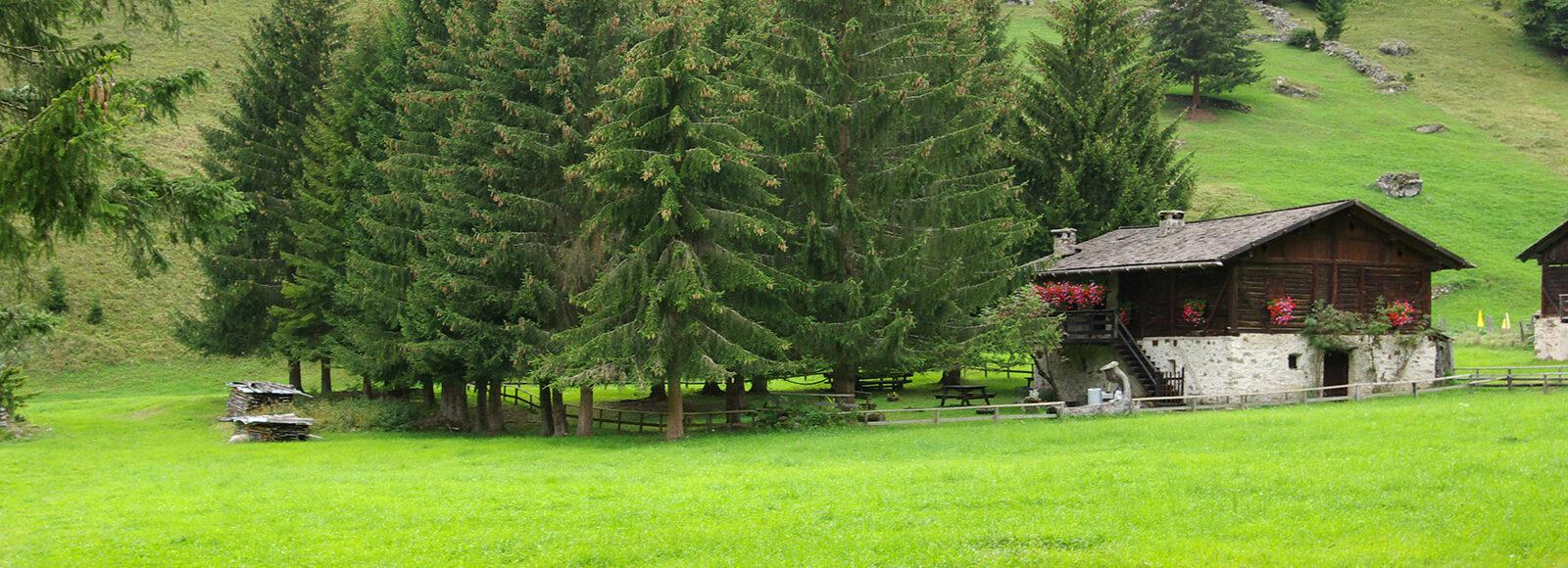 Vacanze Estive in Trentino, Val di Sole | Hotel Salvadori