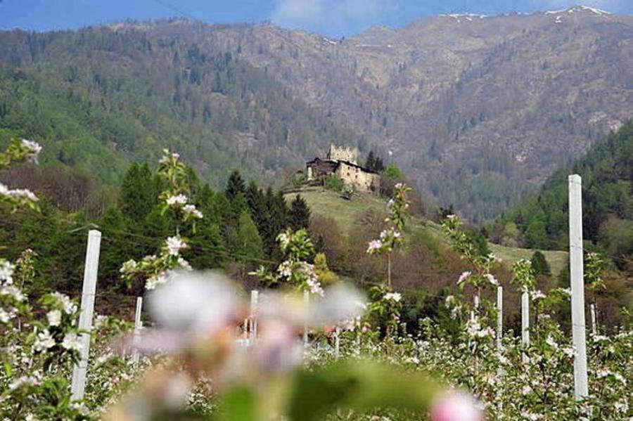 Hotel Salvadori Val Di Sole Mezzana Tn