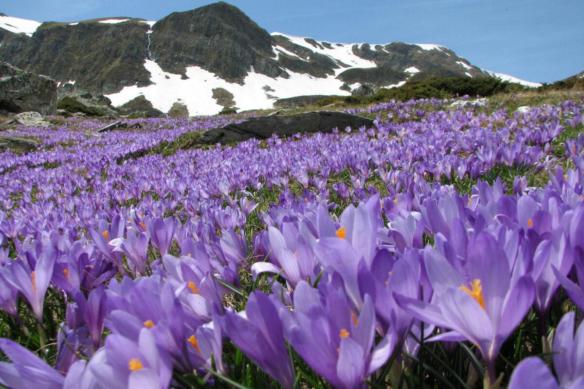 Vacanze in primavera a marilleva in val di sole trentino for Immagini per desktop primavera